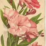 21f-1.jpg