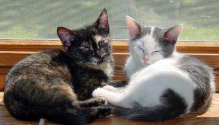 2 catties